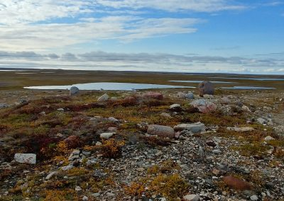 Pretty Arctic Plants